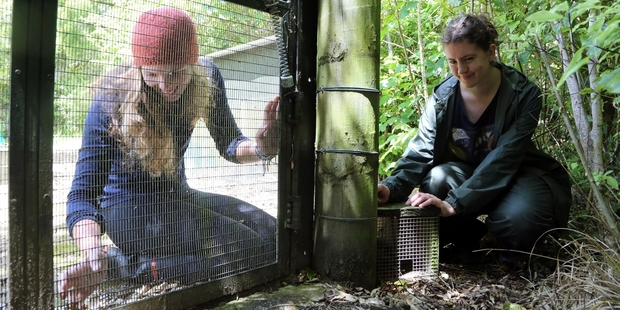 There s work to be done at Bushy Park, and volunteers can help with maintenance at the predator-fenced wildlife sanctuary on Tuesday and Thursday next week. Volunteers Maia Brooke (left) and Katherine Lockton are shown working on predator defences.