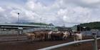 Watch: Watch: Farming in Vietnam