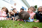 Sparky the kiwi  visits Glenbervie School students. Photo/ Michael Cunningham