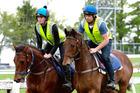 Local horseman Sam Beatson (right) and Myra Crawford-Smith riding track work at Ohaupo. Photo / Michael Rist