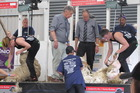 Sibling shearers Laura (left) and Tegwyn Bradley in action in the senior shearing final at the Manawatu A and P Show in Feilding on Saturday. Photo/Doug Laing/SSNZ