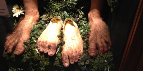Weta Feature by Andrew Bonallack, Hobbit feet in the mini-museum at the Weta Cave in Miramar. Photo / Supplied