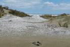 The dunes behind 90 Mile Beach are littered with ancient middens, but they might not last much longer.