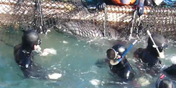 Dolphin hunting in Taiji was exposed by the 2010 documentary The Cove. Photo / Liz Carter Facebook