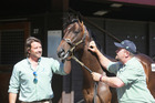 Mark Chittick (left) and Dave O'Leary with the $200,000 O'Reilly colt. Photo / Trish Dunell