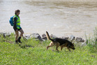 A police officer and her dog search the bank of the swollen Hutt River at the Belmont Domain near where a swimmer went missing. Photo / Mark Mitchell