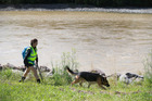 A police officer and her dog search the bank of the swollen Hutt River at the Belmont Domain, near the scene where a swimmer went missing. Photo / Mark Mitchell
