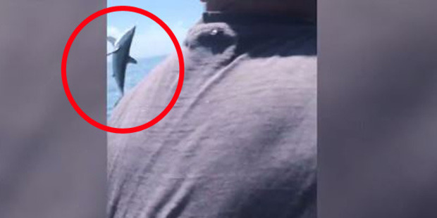 Loading Incredible footage shows shark making a spectacular break for freedom. Photo: Facebook/Andrew Baker