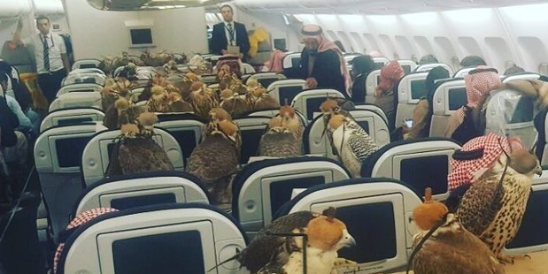 A Reddit user claimed a Saudi prince was transporting 80 falcons. Photo / Reddit, lensoo
