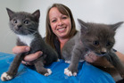 Rotorua SPCA's Nadine Brown with a couple of the many kittens the SPCA is caring for. Photo/Ben Fraser