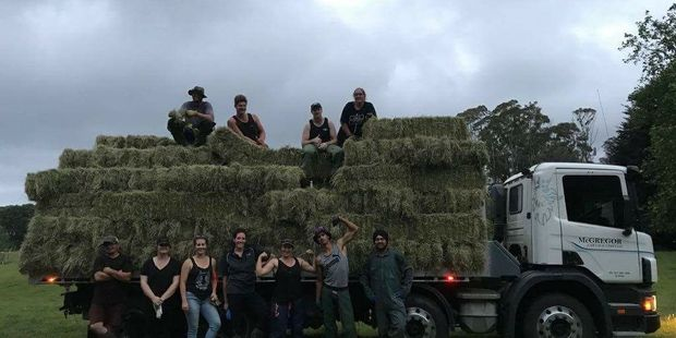 Te Puke Young Farmers helped out with hay making on a local farm last week. Photo / Supplied