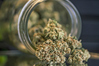 Parliament will debate two pieces of legislation to legalise medicinal cannabis.