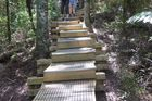 The boardwalk protects the kauri by reducing the risk of the soil-borne, footwear-transmitted infection by moving any foot traffic through the kauri stand away from the soil. Photo / Supplied