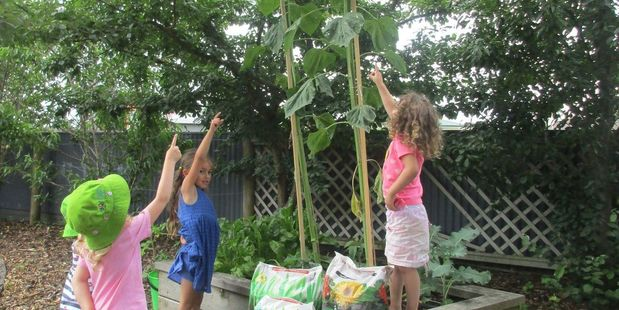 Frankton Kindergarten Kids point to their winning sunflower. It grew to be the tallest sunflower in the country, and in the project's history. Photo / Supplied