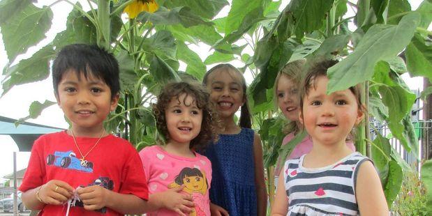Frankton Kindergarten Kids with their sunflowers. Photos / Supplied