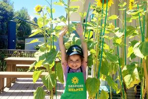Fairfield Kindergarten won the Best Photo award with this entry of 4-year-old Maia reaching for her sunflowers. Photo / Supplied
