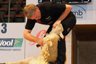 Prime Minister Bill English in action at the World Shearing Champs event. Photo/Supplied