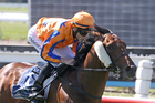 High-profile three-year-old Hall Of Fame is out of classic contention. Photo / NZ Racing Desk