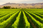 The loan of $3 million to Vintage was intended to be used as working capital for the company which operated a wine growing and production business. Photo / File
