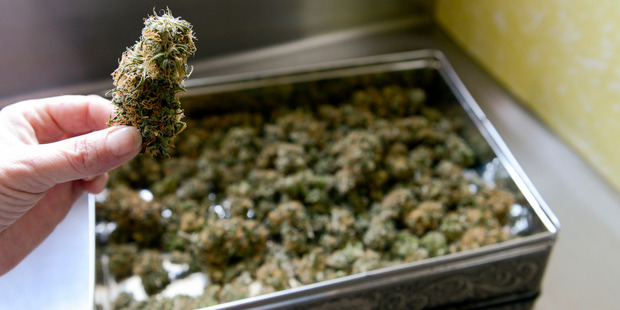 Opposing use of medicinal cannabis to relieve pain and nausea was a dopey crusade. Photo / Kurt Langer