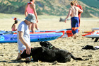 BEACH DAY: Scott Jefferson of Napier with his dogs Pango and Rory watches the Hawke's Bay surf lifesaving champs at Ocean Beach. Photo Warren Buckland