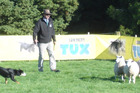 Murray Child and Boy - shown here on their way to winning the Tux Yarding Challenge national title in the King Country last month - took out the long head event at the Bay of Islands Sheep Dog Trial in the Mid North on Saturday afternoon.