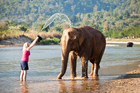 We wanted to treat the elephants in an ethical way. Photo / Getty Images