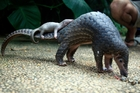 Pangolins are the most trafficked animals in the world. Photo / AP