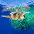 'Caretta Caretta Trapped' by photographer Francis Perez, which won first prize in the Nature, Singles, category.