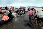 Volunteers frantically attempt to bring whales on their sides upright, allowing them to breathe normally. Photo / Tim Cuff