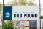 The Whanganui dog pound is past its use-by-date and the search is on for a new location to build a more modern facility.