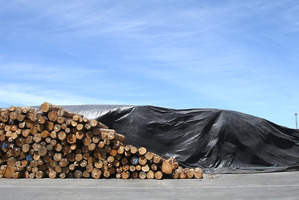 FUMIGATION: Many logs at Port of Tauranga are treated with deadly methyl bromide gas before being exported. PHOTO / JOHN BORREN