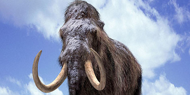 Mammoths died out about 4500 years ago. Photo / Supplied