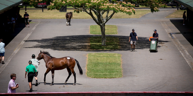The domestic results at the recent Karaka sales were disappointing. Photo / Dean Purcell