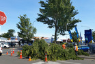 Contractors at work dealing with the large fallen branch in central Hastings which came down at the peak of the wind gusts yesterday. Photo / Duncan Brown