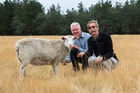 Sharon, the mutant Felting Lustre sheep, with AgResearch scientists David Scobie (left) and Jeff Plowman. Photo / Supplied