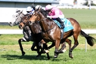 Highlad (outer) is two from two in slow footing and will appreciate the easing track in the Avondale Guineas. Photo / Race Images