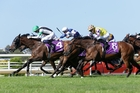 Chenille will attempt to repeat her last-start Ellerslie win in the Avondale Cup on Saturday. Photo / Trish Dunell