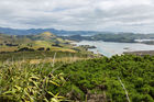 The cyclist suffered a serious head injury after the accident on Otago Peninsula. Photo / 123rf