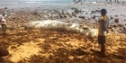 Watch: Watch: Mystery creatures washes up on beach