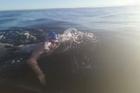 Caitlin O'Reilly swims the Cook Strait. Picture / Coast Swim Club    https://www.facebook.com/MightyMarlinz/