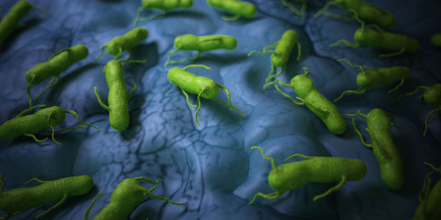 Genetically-modified salmonella could be used to destroy cancer cells while leaving healthy cells alone. Photo / 123RF