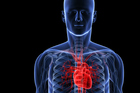 Knowing your heart age is vital to taking control of your health. Photo / Image