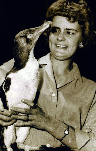 Frances Barber interviewing a penguin when she worked as a reporter for Wellington's Evening Post.