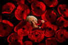 CROCHET: Phyllis Sturmfels has made at least 100 poppies for the QE Health Yarnbomb poppy project. PHOTO/STEPHEN PARKER