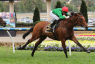 Turn Me Loose's fitness levels have gone up in the past fortnight. Photo / Darryl Sherer