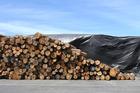 Logs at the Port of Tauranga. Photo/John Borren