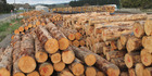 The average price for roundwood logs rose to $90 a tonne in February, up $5 from January's average price.