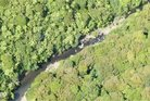 The Native Forest Restoration Trust wants help to acquire a large tract of forest adjacent to Waipoua Forest.