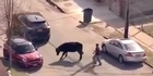 Watch: Watch: Bull on the loose in Queens, New York